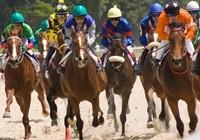 racehorses1