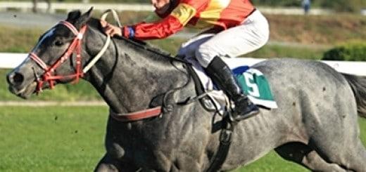 greyhorse1
